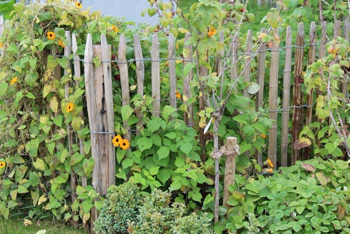 gartengestaltung mit staketenzaun staketenzaun und kastanienzaun für den bauerngarten
